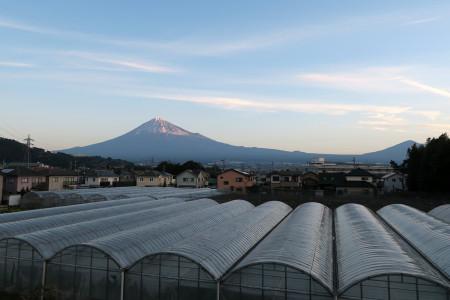 雁堤からの富士山