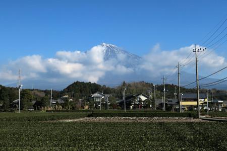 昼前の富士山と茶畑