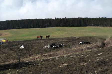 牧場の牛と馬たち