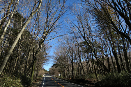 県道71号富士の樹海