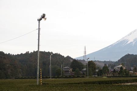 近所の茶畑