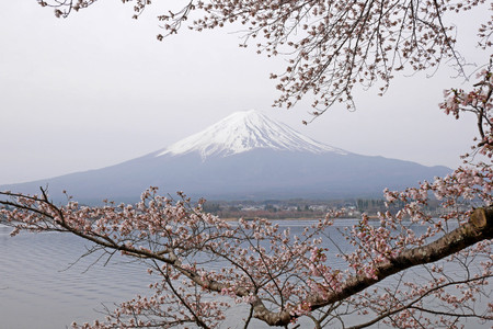 河口湖畔の桜と富士山