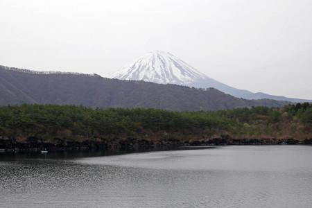 西湖からの富士山