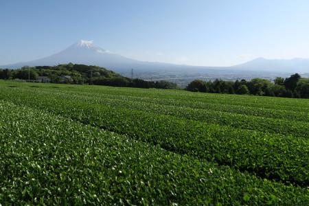 新茶葉と富士山