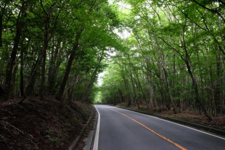 県道71号の緑