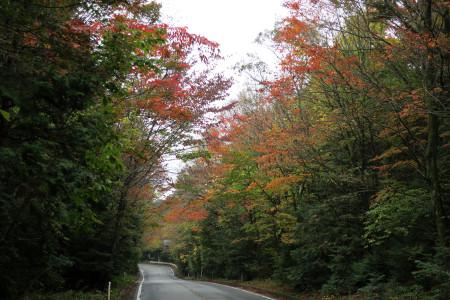鳴沢村の紅葉