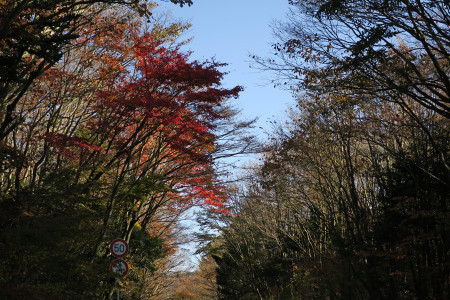 紅葉の木々