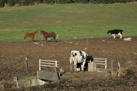 牧草地の光景