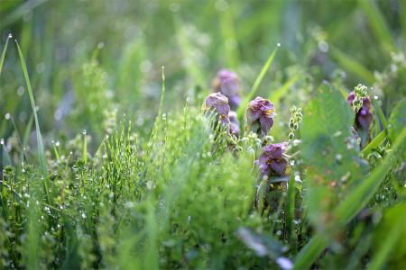 牧草地の緑