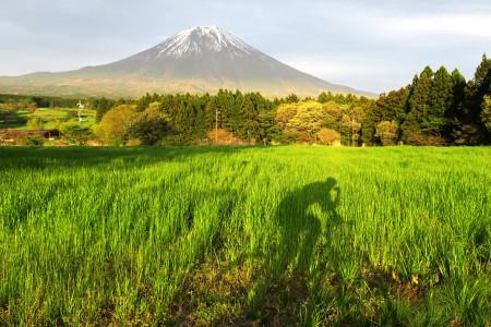 牧草地を照らす夕日と