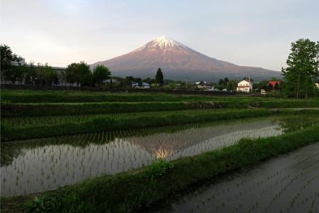 この季節ならではの逆さ富士