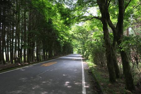 林道の並木