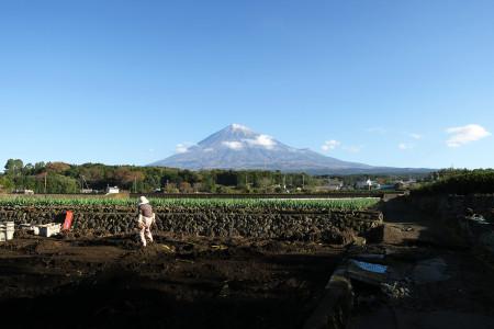 杉田からの富士山